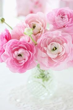 Ranunculus Ranunculus is a large genus of about 600 species of plants in the Ranunculaceae. Members of the genus include the buttercup. My Flower, Fresh Flowers, Pink Flowers, Beautiful Flowers, Ranunculus Flowers, Happy Flowers, Pink Peonies, Colorful Flowers, Beautiful Pictures