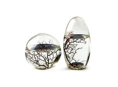 EcoSpheres. A whole ecosystem completely enclosed in handblown glass. With sufficient light and a comfortable room temperature, the shrimp, algae and microbes will coexist peacefully in their own little world without any help. $55 and up.