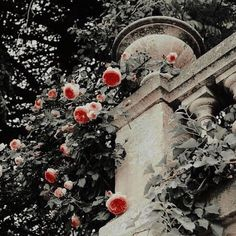 '' my mother hated red roses, but I really love the Malfoy's rose bush. Disney Aesthetic, Princess Aesthetic, Book Aesthetic, White Aesthetic, Aesthetic Photo, Anna Y Elsa, Prince Charmant, Donna Tartt, The Secret History
