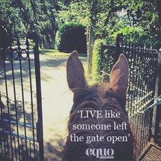 """Live like someone left the gate open."" It's everyone's favourite day of the week… tag us on your #FridayFunday pictures"