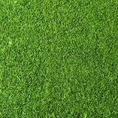 You've got many options to explore when starting to plant grass in Orlando. Learn more here about how to start a beautiful lawn. Artificial Grass Rug, Fake Grass, Carpet Stair Treads, Carpet Stairs, Outdoor Carpet, Indoor Outdoor, Types Of Grass, Grass Decor, Photoshop