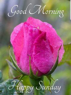 Good Morning Happy Sunday, Good Morning Greetings, Good Morning Quotes, Sunday Quotes, Good Morning Wishes Friends, Good Night Wishes, Morning Pictures, Morning Images, Good Night Love Images