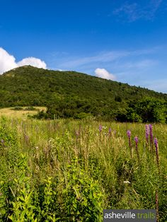 Hike the Sam Knob Trail through fields of wildflowers and wild berries just off the Blue Ridge Parkway in western NC