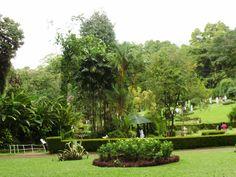 Botanical Gardens, Golf Courses, Plants, Flora, Plant