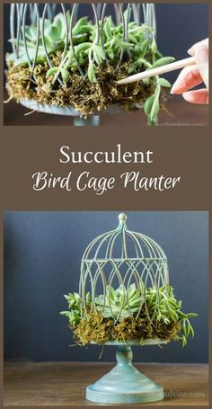 Learn how easy it is to make a succulent birdcage planter. Give one as a gift to someone you love, or to enjoy it in your own home. I love bird cages AND succulents!