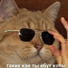 Funny School Memes, Memes Funny Faces, Stupid Memes, Cute Animal Memes, Animal Jokes, Reaction Pictures, Funny Pictures, Hello Memes, Happy Memes