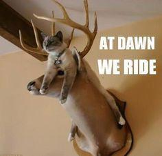 At dawn we ride!