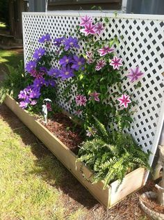 Screen a steel container with charming clematis-covered lattice.