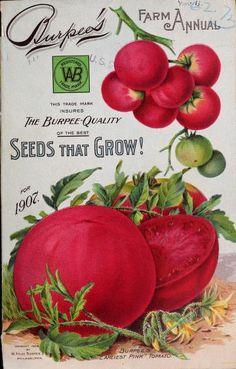 old burpee vegetable seed packets art Posters Vintage, Images Vintage, Vintage Prints, Pub Vintage, Vintage Diy, Vintage Labels, Vintage Kitchen, Garden Catalogs, Seed Catalogs