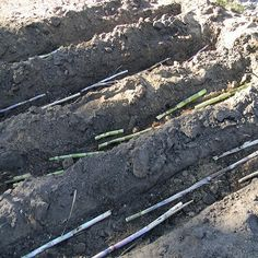 If you live in the South, you can grow your own sugar cane. Learn to plant, harvest and make delicious syrup at home!