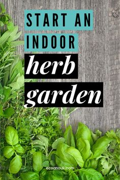 While we're staying at home and out of trouble, let's learn how to start an indoor herb garden in the kitchen. Herbs are easy to grow, and very useful. Whether you're looking for thyme or rosemary, wouldn't it be awesome to pick it fresh from the source? Read on for some of the best herbs to grow indoors to create your own herb garden. #herbs #garden #home #sustainable Eco Garden, Herbs Garden, Garden Ideas, Growing Herbs Indoors, Growing Plants, Gardening For Beginners, Gardening Tips, Best Herbs To Grow, Farm Lifestyle