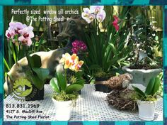 Something for your home. #orchids #gifts #homedecor