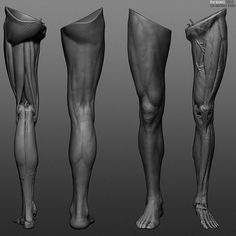 Reference of human legs anatomy skin in ZBrush.