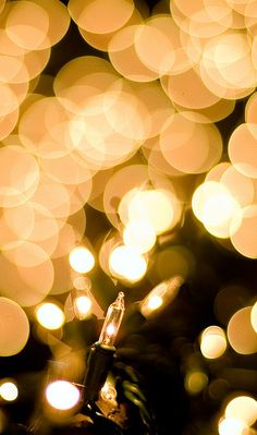 autumnnightswinterplights:  A Thousand Points of Christmas Lights by Ryan Brenizer on Flickr.