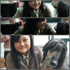 Snuppy (Clonned Dog)