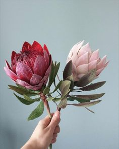 Image may contain: plant and flower Giant Flowers, Rare Flowers, Diy Flowers, Fabric Flowers, Beautiful Flowers, Crepe Paper Crafts, Tissue Paper Flowers, Protea Flower, Australian Native Flowers