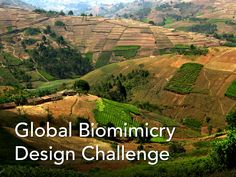 The Global Biomimicry Design Challenge will mobilize thousands of students and professionals around the world to tackle the problem of food security.