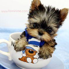Sabah kahvesi, şekerli Herkese günaydın ❤️ www.forminime.com