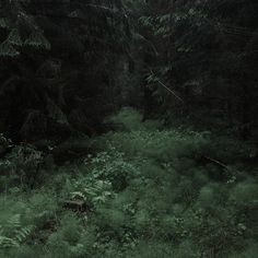 Road to reply Dark Green Aesthetic, Nature Aesthetic, Slytherin Aesthetic, Dark Paradise, Forest Fairy, Dark Forest, Pretty Pictures, Aesthetic Pictures, Scenery
