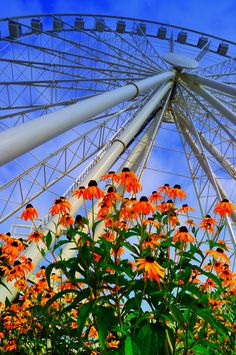 The Wheel! The largest landmark in Pigeon Forge! #pigeonforge