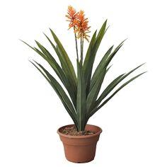 Artificial plant, 33'' aechmea