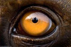 Eyes Of Animals