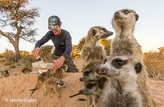 The collaborators. Weighing in the orphaned meerkats at the Kalahari Meerkat Project, South Africa. By Jennifer Guyton Photo Competition, Single Image, Photo Contest, Natural History, Nature Photos, Animal Rescue, Camel, The Past, Wildlife