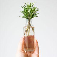 Rozemarijn stekken Growing Vegetables At Home, Garden Deco, Garden Art, Herbal Plants, Green Tips, Green Plants, Permaculture, Vegetable Garden, Indoor Plants