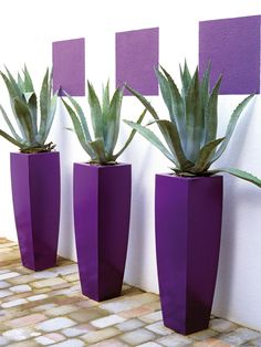 This terrace walkway gets a stunning focal point from repetition of form. The purple planters and painted squares against a white wall enhance the green agave. Container Plants, Container Gardening, Pot Jardin, Flower Pots, Flowers, Deco Floral, All Things Purple, Front Yard Landscaping, Landscaping Ideas