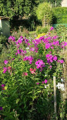 Wunderschöne Blumen - null