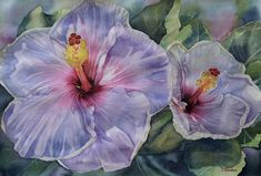 A beautiful pair of hibiscus flowers done in watercolor by Hawaii artist Colleen Sanchez. This original painting is Tree Tops, Seascape Paintings, Hibiscus Flowers, In The Tree, Watercolour Painting, Flower Art, Original Paintings, Tropical, Fine Art