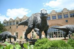 Fernbank Museum of Natural History - Atlanta, GA -Where to take Olivia