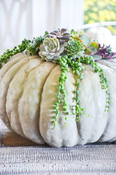 Succulent Top Pumpkins is about creating pumpkins that are round works of art! Succulents fill the top of pumpkins and will last until Thanksgiving. White Pumpkins, Fall Pumpkins, Fall Vase Filler, Pumpkin Planter, Easy Fall Wreaths, Autumn Nature, Cactus Y Suculentas, Pumpkin Decorating, Decorating Ideas