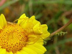 natuurrondleiding door een IVN-Natuurgids: Portugal crabspin