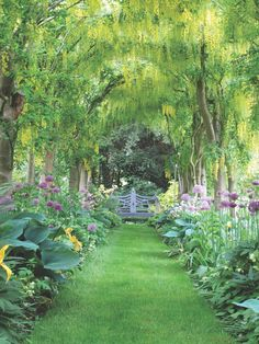 """British designer David Hicks once called Lancaster """"the most influential English gardener since Gertrude Jekyll."""" At Haseley Court, she planted an allée of laburnum that still enchants today. Click to see more Nancy Lancaster gardens and designs..."""