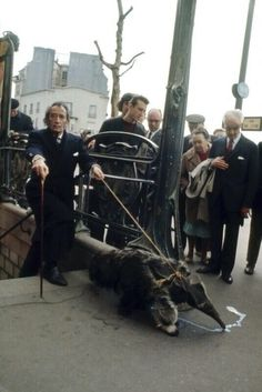 Not Japan but how can I not share this; it's insane.   Salvador Dali exiting a Parisan subway with his pet anteater. What the hell. I bet he has some Japanese in him. He has to.