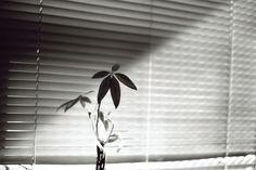 Nature of daylight by gonecanuck on DeviantArt 35mm Film, Nikon, Deviantart, Artwork, Nature, Home Decor, Art Work, Naturaleza, Homemade Home Decor