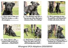 ADOPTED Montana and Vida are waiting to be adopted at Whangarei SPCA www.whangareispca.co.nz