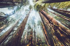 Trees are beautiful! Found on ohpioneer.com The Ancient Forest - https://www.youtube.com/watch?v=A56xn2LHvgY
