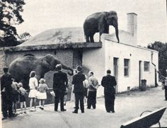 when Nazis rounded up Jews during WWII these zookeepers did something amazing.None