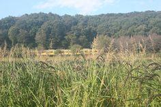 八国山緑地の麓に広がる北山公園は、東村山駅西口から徒歩約15分に位置します。 映画「となりのトトロ」でサツキとメイのお母さんが入院した七国山病院は、八国山とその近所にある病院がモデルになってます。この画像の奥の森が八国山緑地。 手前が当パークから徒歩6分に位置する所有田です。ここで様々な農業体験が行えます。