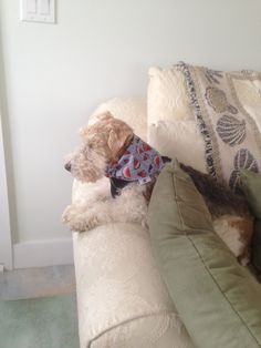Bailey, our wire fox terrier, in sunroom at his Aunt Sandra's house in NC during our April, 2014 visit.