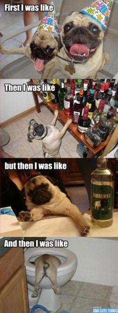 Animal Memes | OMG Cute Things