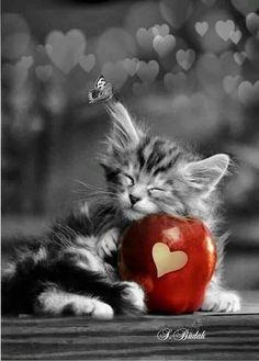 Une pomme d'amour. ♥