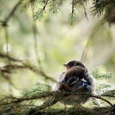 Little Bird                                                                                                                                                                                 More