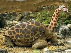 turtle giraffe