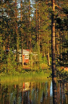 watery red cabin in the woods, Sweden