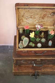 With Cactus being such a trend, this vintage trunk full of succulents is a really cool idea. Cacti And Succulents, Planting Succulents, Planting Flowers, Indoor Garden, Garden Plants, Indoor Plants, Indoor Cactus, Deco Cafe, Cactus E Suculentas