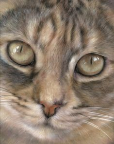 Cats - The Wildlife Art OfVic Bearcroft