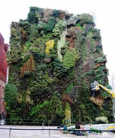 An art installation of green plants growing on the wall of the building next to the CaixaForum Madrid — a modern art gallery — In Madrid, Spain. The living wall was created by french botanist Patrick Blanc
